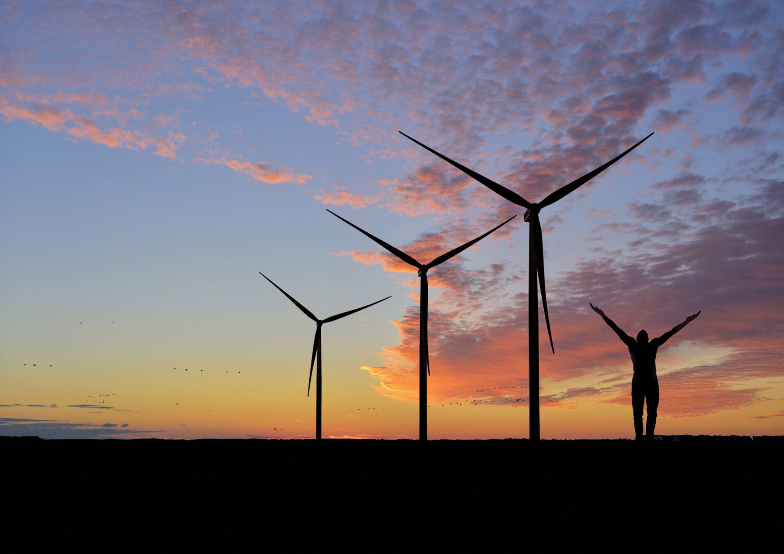 Wind farm with wind turbines